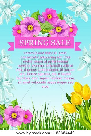Spring sale poster with flowers bouquets. Vector promo template of springtime crocuses or violas and floral bunches of blooming lily, roses and tulip blossoms with daffodils on green grass field