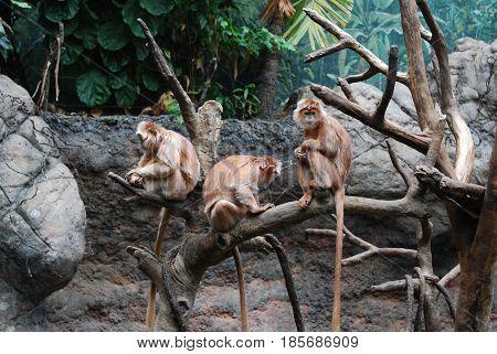 Three langur monkeys sitting in a fallen tree.