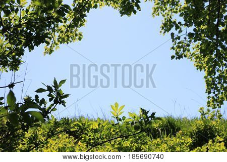 Photo of clear blue sky in natural green frame of grass, leaves and branches of bushes and trees with space for text. Abstract photo of beautiful summer landscape for advertising text placements.