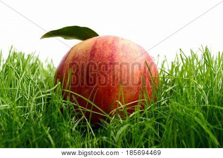 Apple Red Color Fallen On Fresh Green Grass