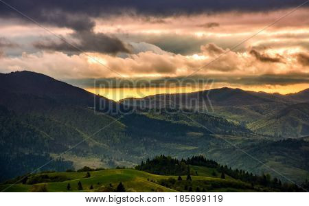 Spruce Forest On A Mountain Hill Side At Sunset