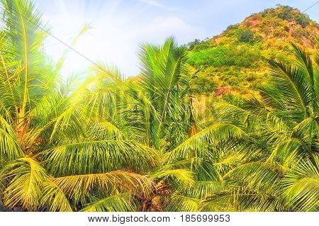 Mountain In Tropics.