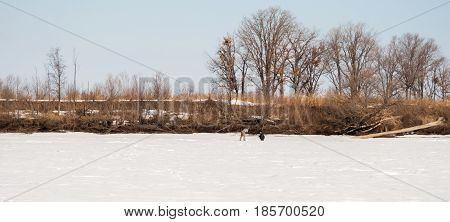 Fishermen drill holes for winter fishing .