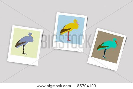 Illustration Polaroid Photo stork nature flat bird