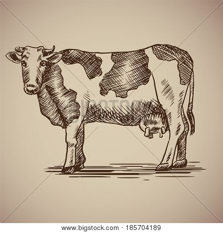 Vector illustration livestock drawn by hand. Farm animals on gray background.