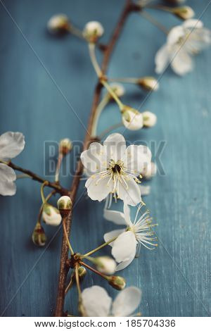 Spring blossom on blue wooden table. Beautiful spring flowers over rustic background