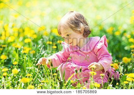 little girl in a pink dress is looking at a dandelion in a green clearing with yellow dandelions