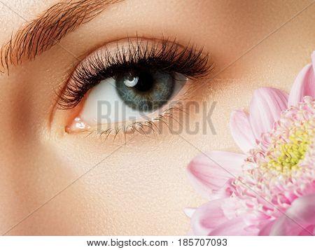 Beautiful Macro Shot Of Eye With Extreme Long Eyelashes. Close-up Macro Of Female Eye With Perfect S
