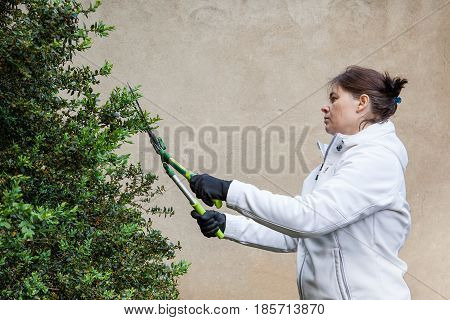 woman in white cuts hedges with gardening scissors