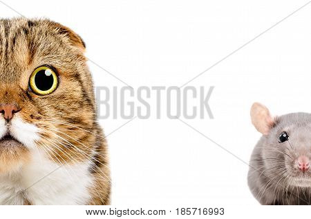 Cat and rat, half face, isolated on white background