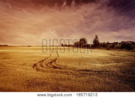 Beautiful golden wheat field in sunset. Rural agricultural landscape with vintage filter.