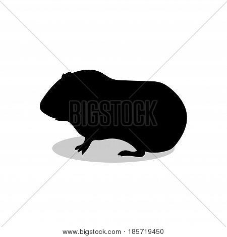 Guinea pig pet rodent black silhouette animal. Vector Illustrator.