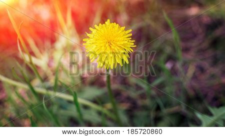 Dandelion Seeds Blowing Wind, Dreamy Magical Image With Green Tones. Abstract Dandelion Flower Backg