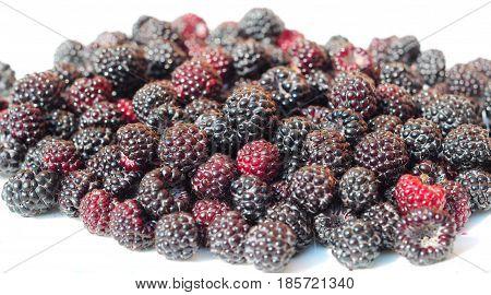 Blackberries for Healthy Eating. Benefits of Blackberry Fruit. Brombeeren.