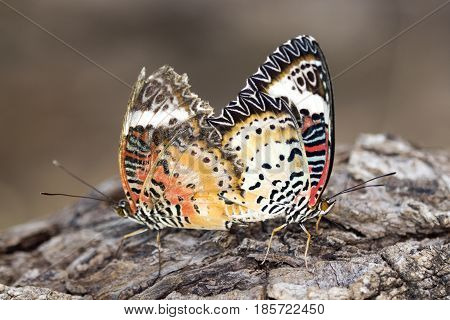 Image of two butterflies on nature background. Insect Animals.