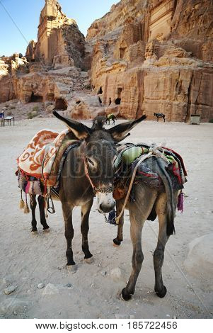 Traditional donkeys in town of Petra Jordan