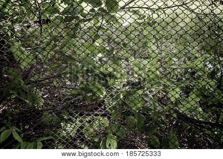 The leaves of the trees and bushes envelop the old mesh. Texture with greens and a metal grid.