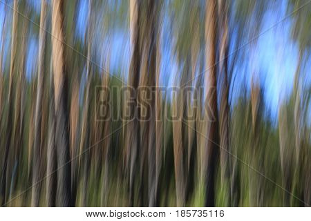 Artistic landscape with birch tree trunks and blue sky effect achieved with in-camera motion blur. Suitable for backgrounds.