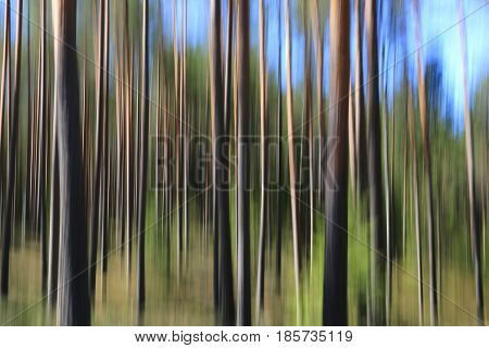 Artistic landscape with pine forest tree trunks and blue sky effect achieved with in-camera motion blur.