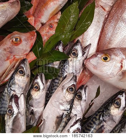 Red Mullet And Pandora Fishes On The Market