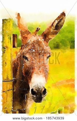 Digital watercolour of a Donkey in a land