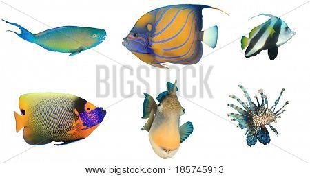 Fish isolated. Reef fish white background. Tropical fish cutout. Parrotfish, Angelfish, Bannerfish, Triggerfish, Lionfish