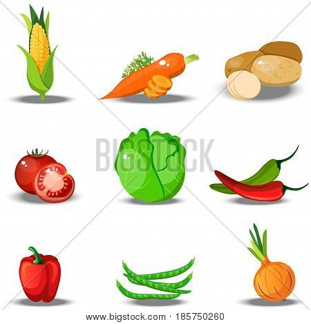Very high quality original trendy vector set with fresh healty vegetables. Summer agriculture design. paprika, corn, tomato, carrot, cabbage, potato, beans, onion, pepper