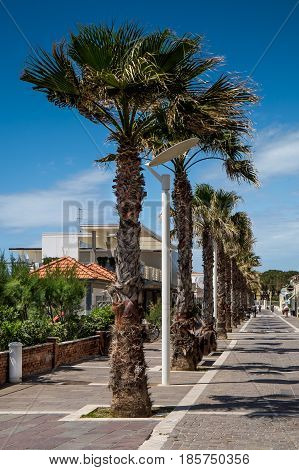 MARINA di CECINA ITALY - May 07 2017: Largo Cairoli during the Kite Festival and the flowers Largo Vittoria street with palms