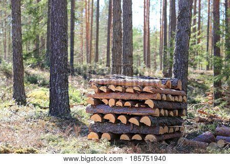 Pile of neatly stacked pine firewood in forest. Shallow dof bokeh effect in woodland.