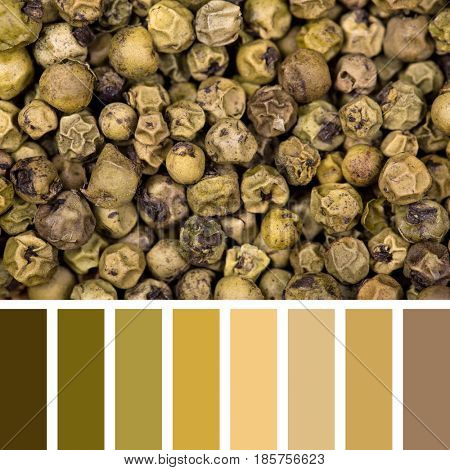 A background of green peppercorns in a colour palette, with complimentary colour swatches
