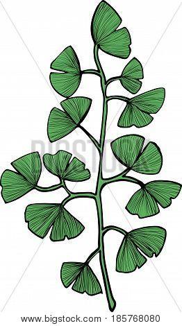 Ginkgo Biloba green branch vector clip art