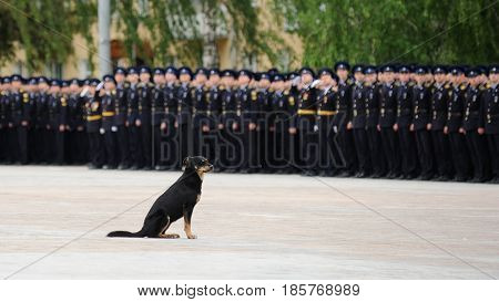 Orel Russia - May 9 2017: Celebration of 72th anniversary of the Victory Day (WWII). Black stray dog sitting in front of military men row at parade horizontal