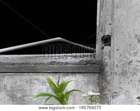 Broken door in monochrome with green leaf in abandoned old property with balck copy space where window was.