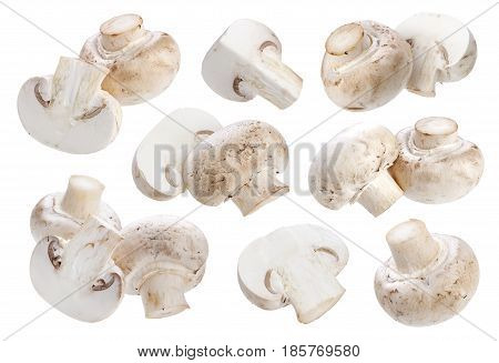 Mushroom champignon isolated on white background with clipping path
