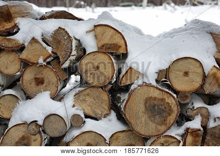 Garden - Natural firewood for a kindling of a fire the furnace or a brazier in snow.