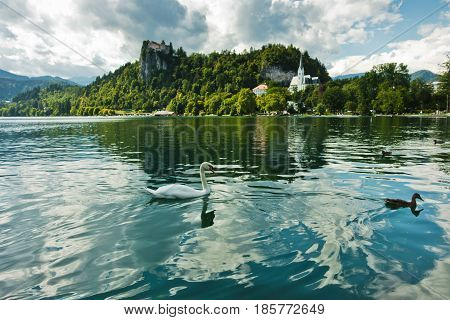 Swan on a lake Bled with castle on a hill in a background, slovenian Alps, Slovenia