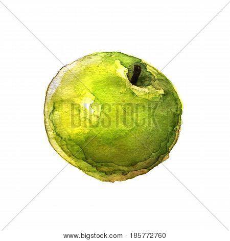 Green apple. Hand-drawn watercolor image on white background