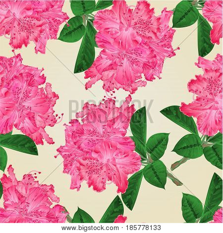 Seamless texture flowers pink rhododendrons twig Mountain shrub vintage hand draw vector illustration