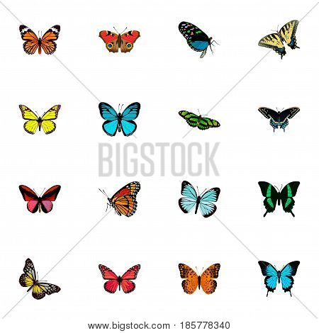 Realistic Summer Insect, Beauty Fly, Danaus Plexippus And Other Vector Elements. Set Of Beauty Realistic Symbols Also Includes Pink, Red, Cynosura Objects.