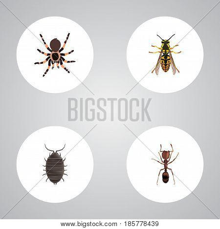 Realistic Bee, Dor, Tarantula And Other Vector Elements. Set Of Animal Realistic Symbols Also Includes Dor, Wisp, Arachnid Objects.