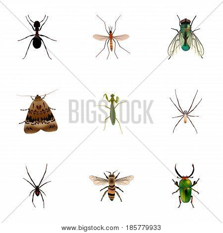 Realistic Gnat, Wisp, Housefly And Other Vector Elements. Set Of Bug Realistic Symbols Also Includes Insect, Jewel, Moth Objects.