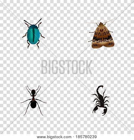 Realistic Poisonous, Ant, Bug And Other Vector Elements. Set Of Hexapod Realistic Symbols Also Includes Poisonous, Pismire, Moth Objects.