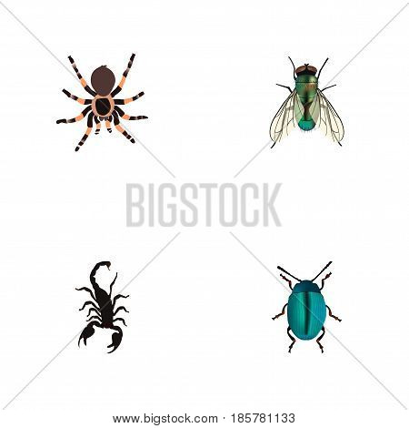 Realistic Bug, Poisonous, Housefly And Other Vector Elements. Set Of Hexapod Realistic Symbols Also Includes Scorpion, Insect, Spider Objects.