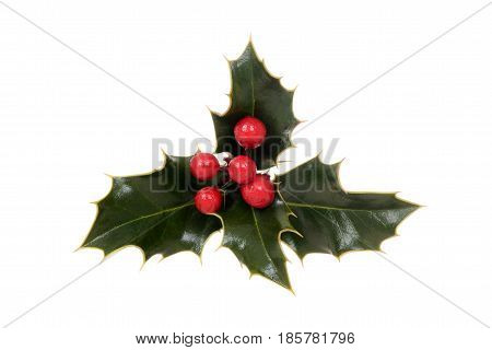 isolated holly with red berries on white background