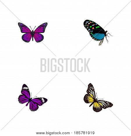 Realistic Summer Insect, Purple Monarch, Hairstreak And Other Vector Elements. Set Of Butterfly Realistic Symbols Also Includes Purple, Bluewing, Violet Objects.