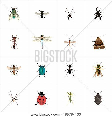 Realistic Bug, Grasshopper, Spinner And Other Vector Elements. Set Of Bug Realistic Symbols Also Includes Damselfly, Arachnid, Scorpion Objects.