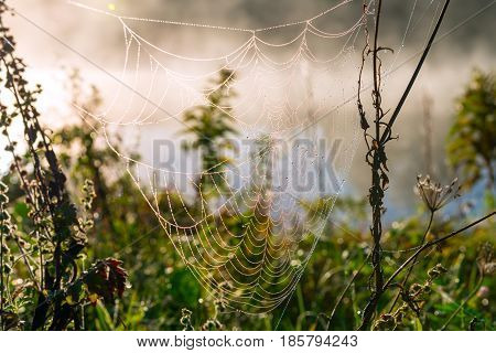 A spider web with some dew early in the morning with the sun rays