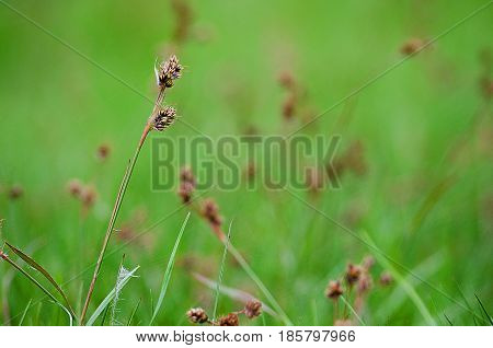 Green grass stem growing outdoors on a sunny day