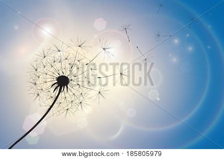 Silhouette of a dandelion with seeds blowing in a summer breeze. Blue sky bokeh background with sunlight and light flares. Space for text.