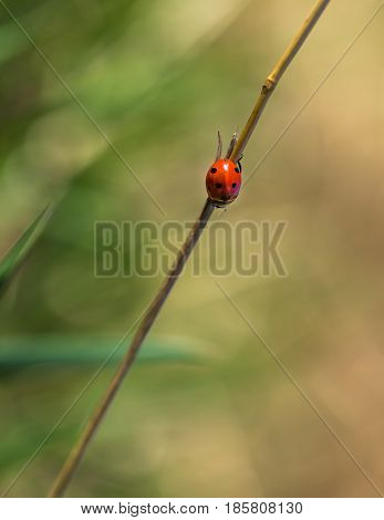 Macro Of Ladybug Sitting On Plant